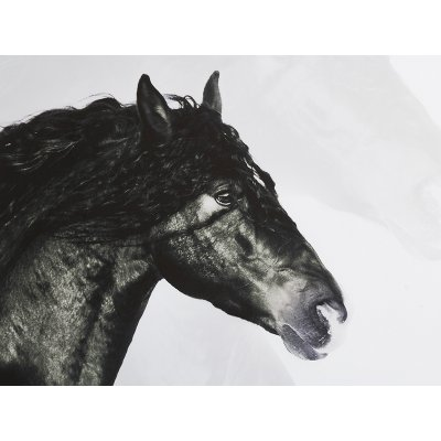 Cuadro caballo negro - Imagen 1