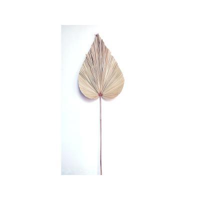 Hoja palmera seca - Imagen 1